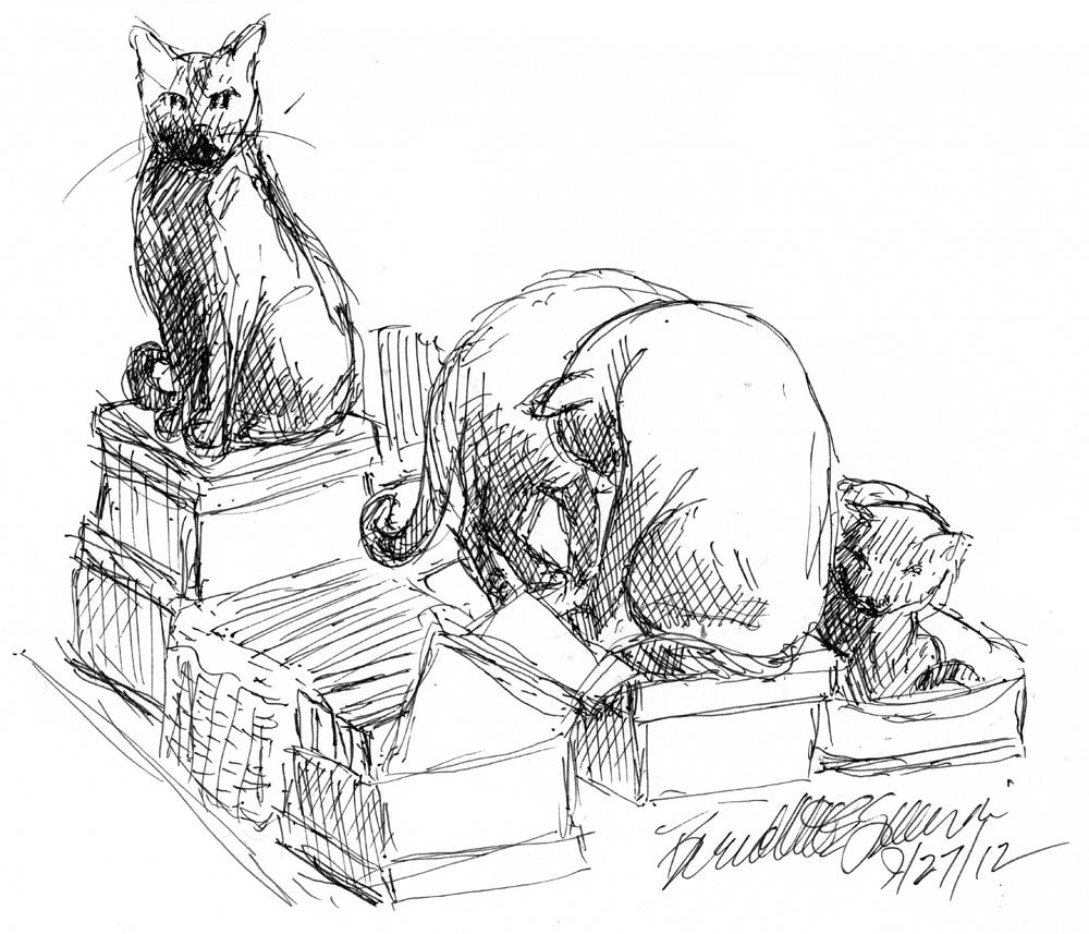 sketch of cats on boxes