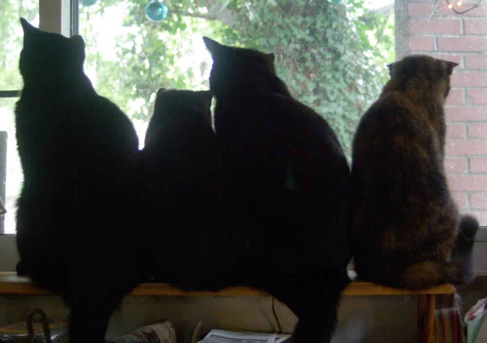 four cat silhouettes