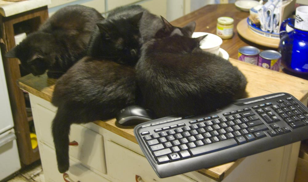 four cats on cabinet with keyboard