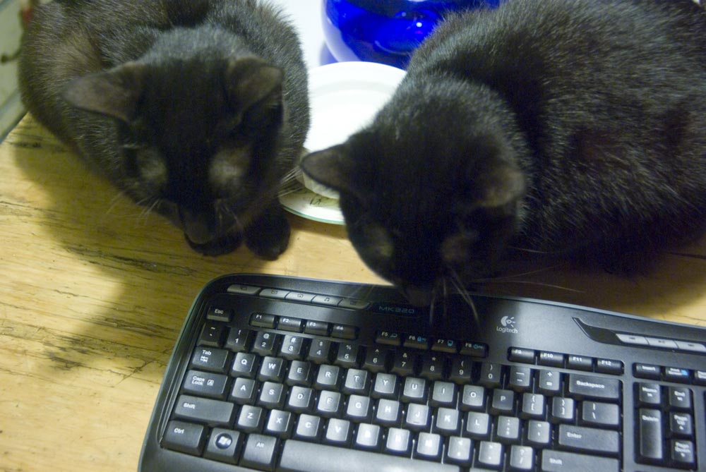 two black cats looking at keyboard