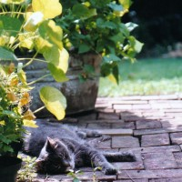 gray cat on bricks in shade