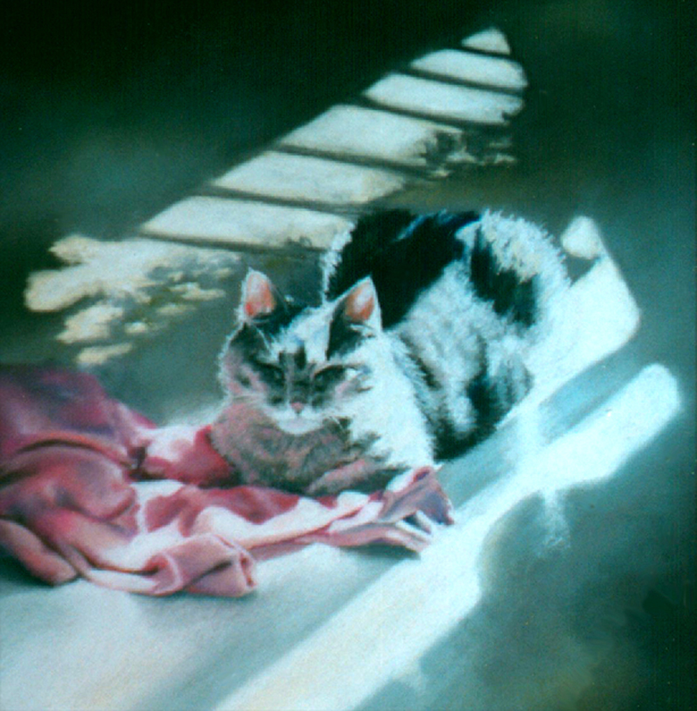 pastel painting of gray cat with pink sweather
