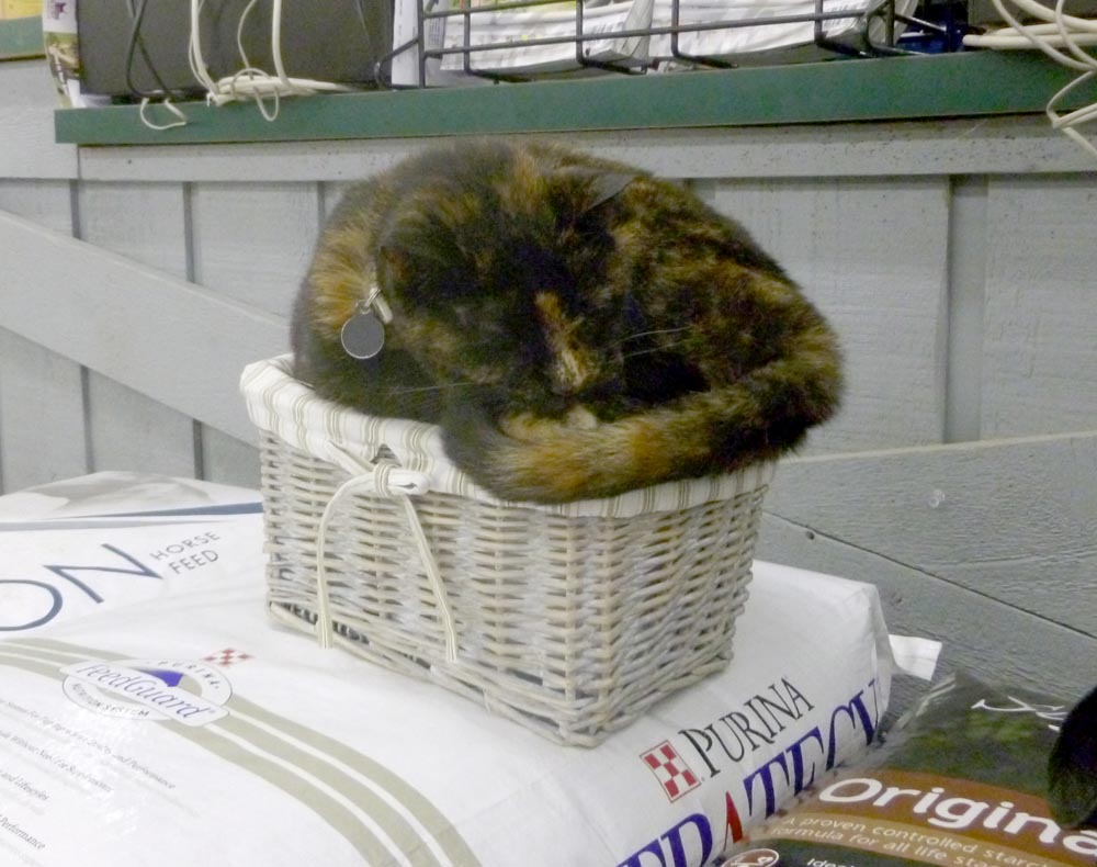 tortoiseshell cat on basket