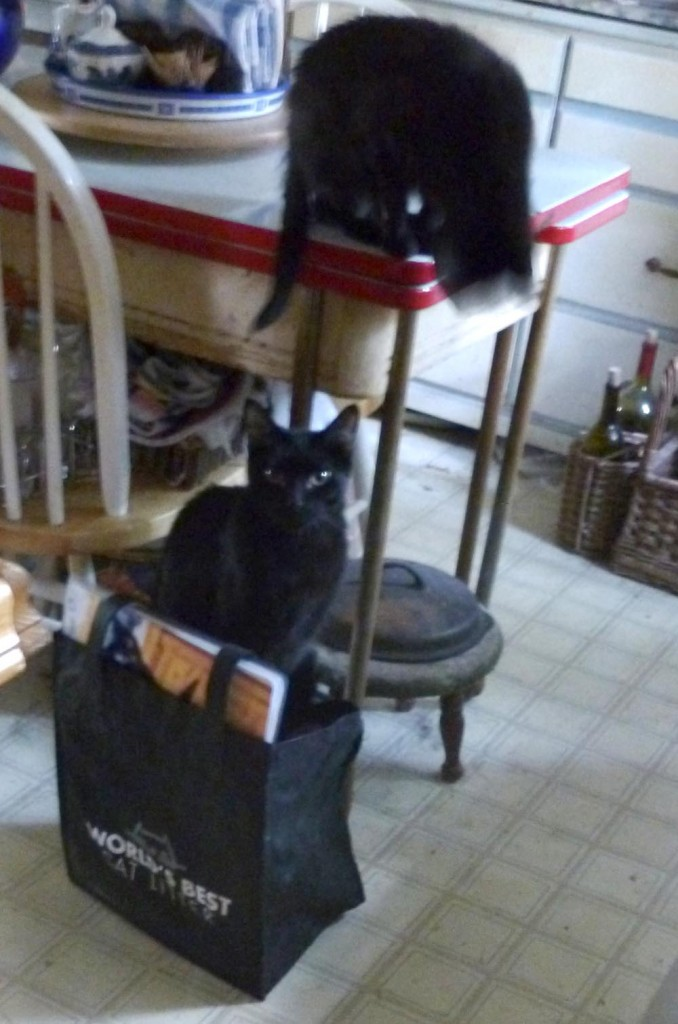 two black cats with bag of cards