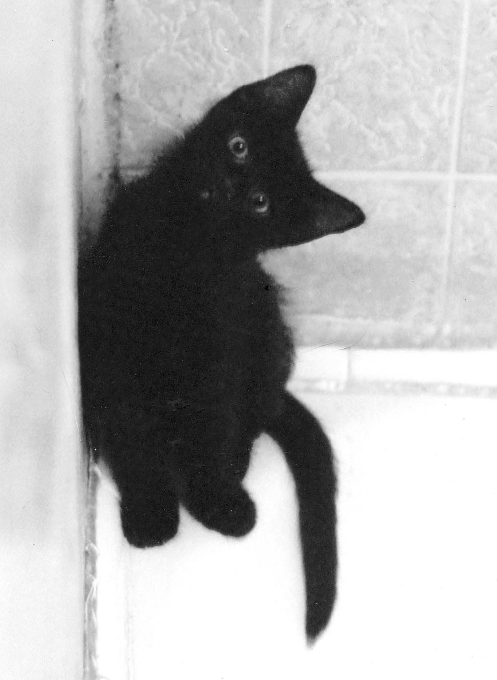 black kitten on edge of tub