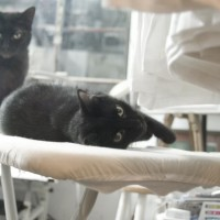 two cats on ironing board