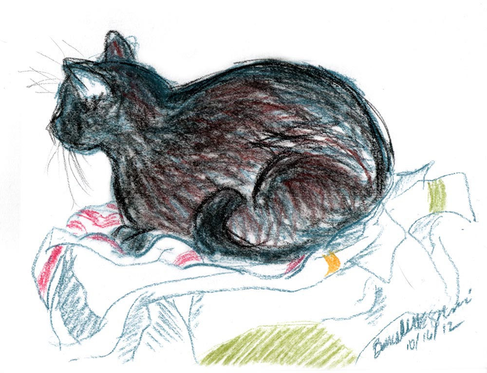 Daily Sketch: Settling In for a Nap ~ The Creative Cat