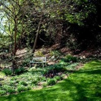 The woodland garden in spring.