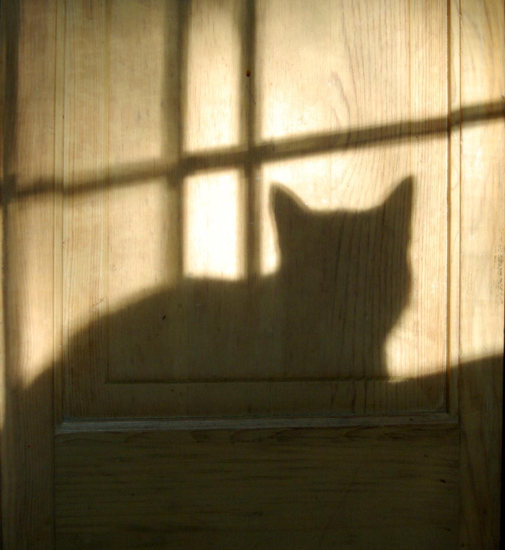 Daily Photo Reprise: Shadow Kitty, 2010 ~ The Creative Cat: http://thecreativecat.net/daily-photo-reprise-shadow-kitty-2010/