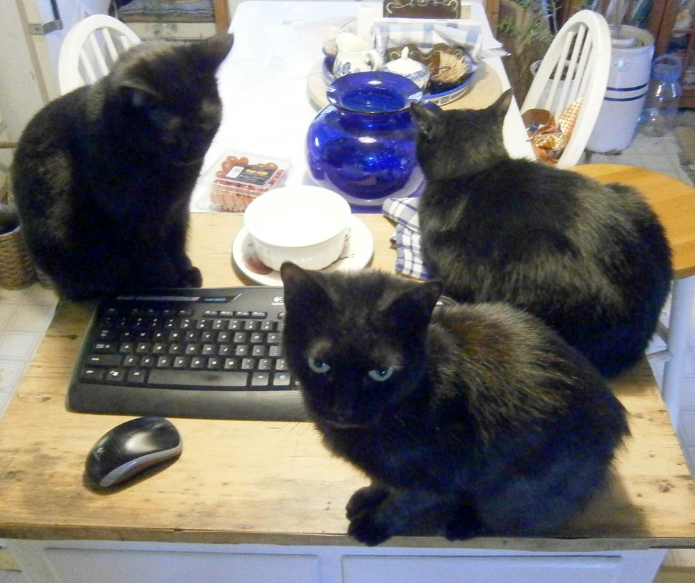 three black cats by computer keyboard