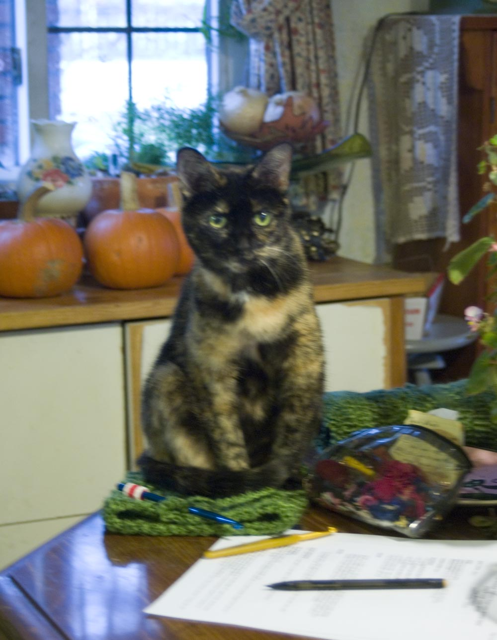 tortoiseshell cat sitting on crochet