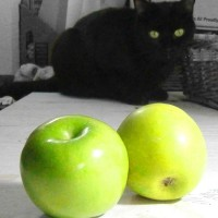 black cat looking at green apples