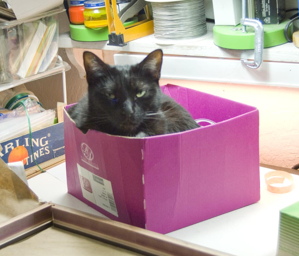 black cat in pink box Daily Cat Photo