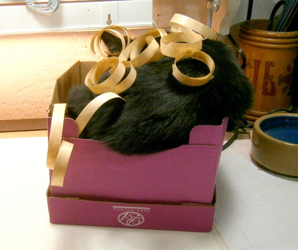 black cat in pink box with tape Daily Cat Photo
