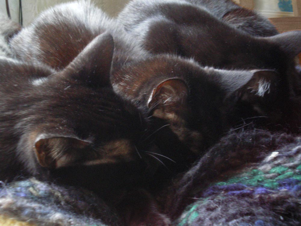 three cats sleeping on shawl Daily Cat Photo