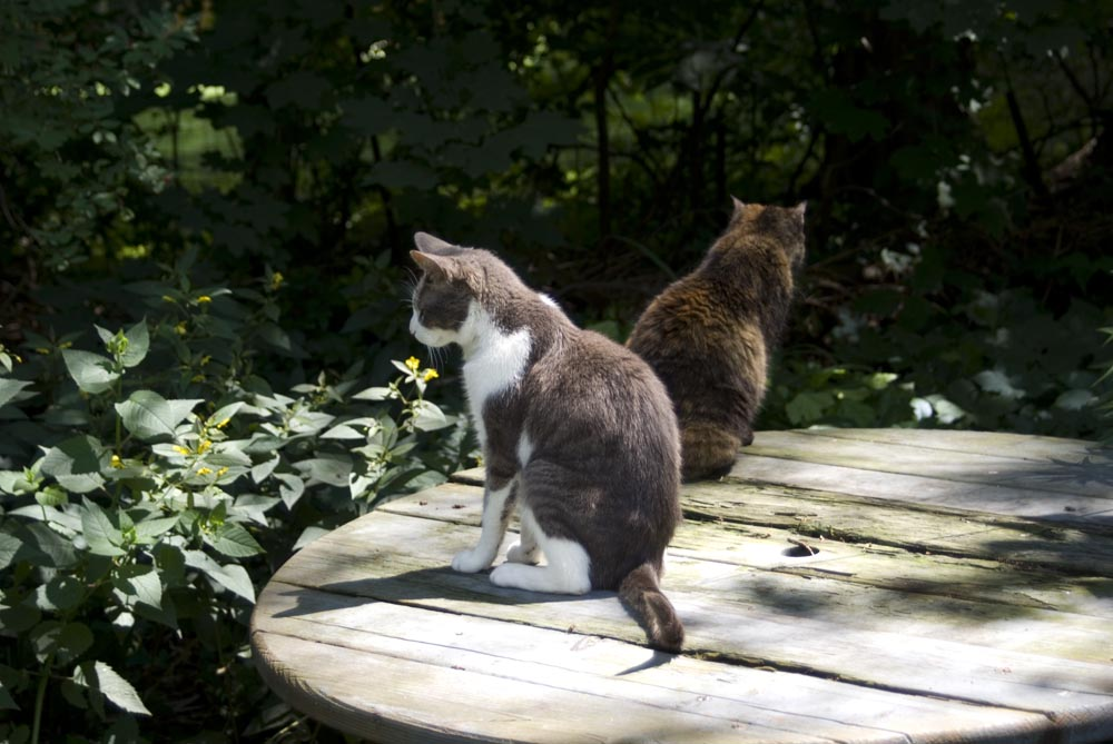 two cats on picnic table
