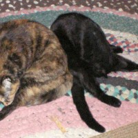 two cats bathing on rug
