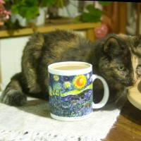 tortoiseshell cat with cup of coffee