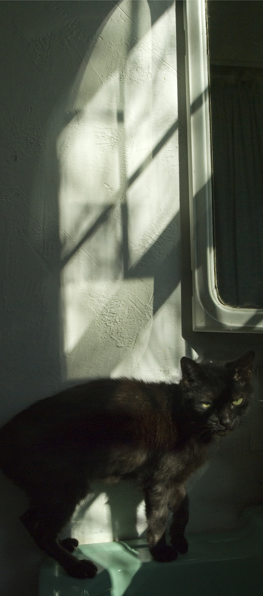 black cat on green sink with reflected light.
