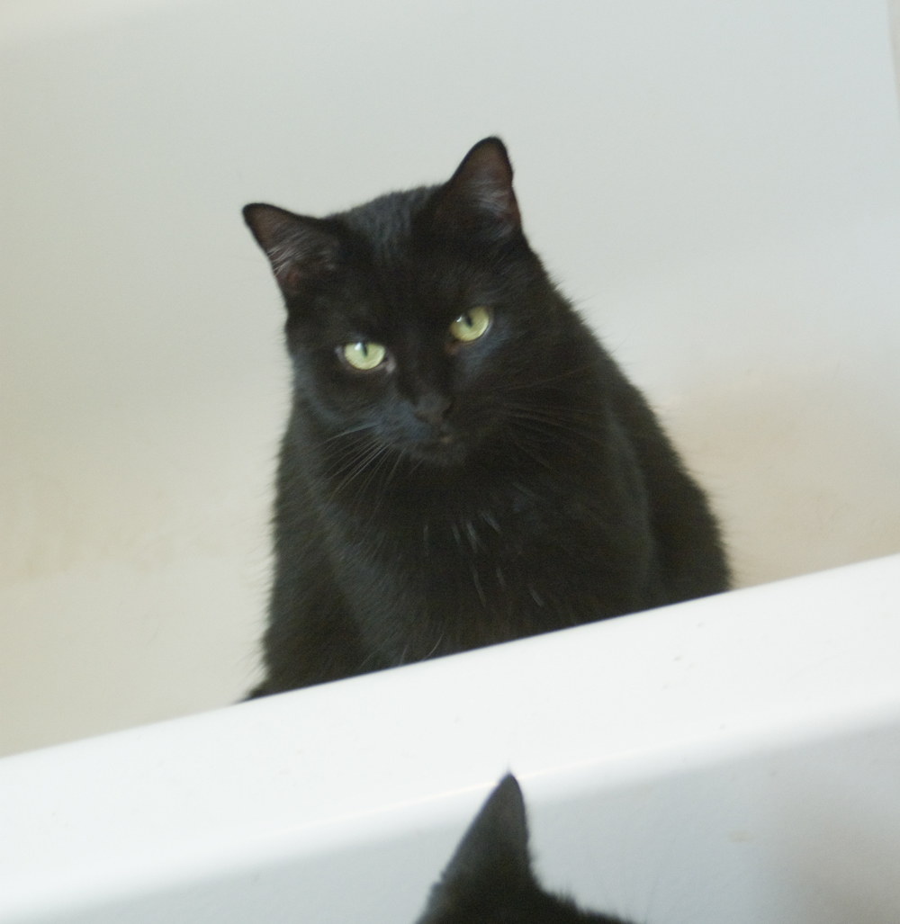 black cat in tub with black cat ear