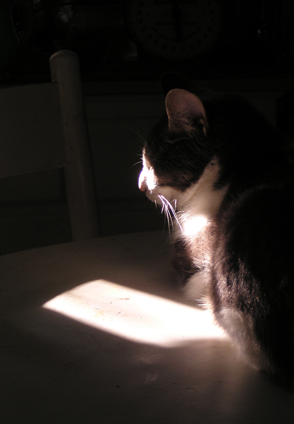 cat in spot of sun