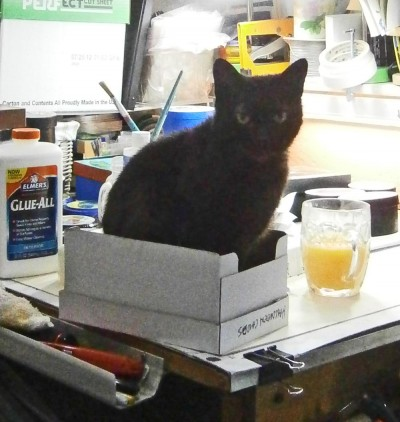 black cat in white box