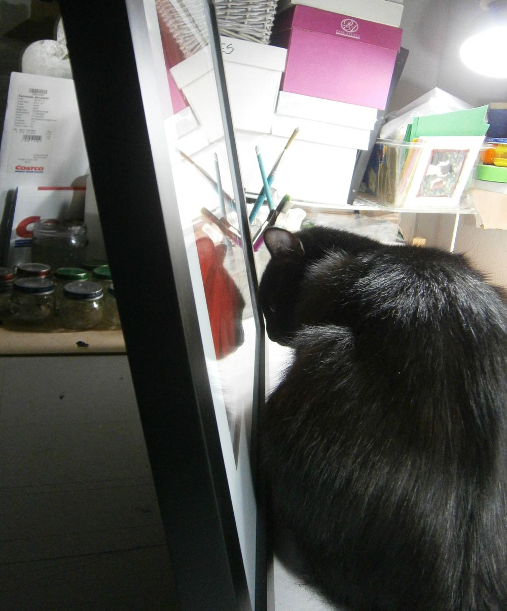 black cat looks into picture frame