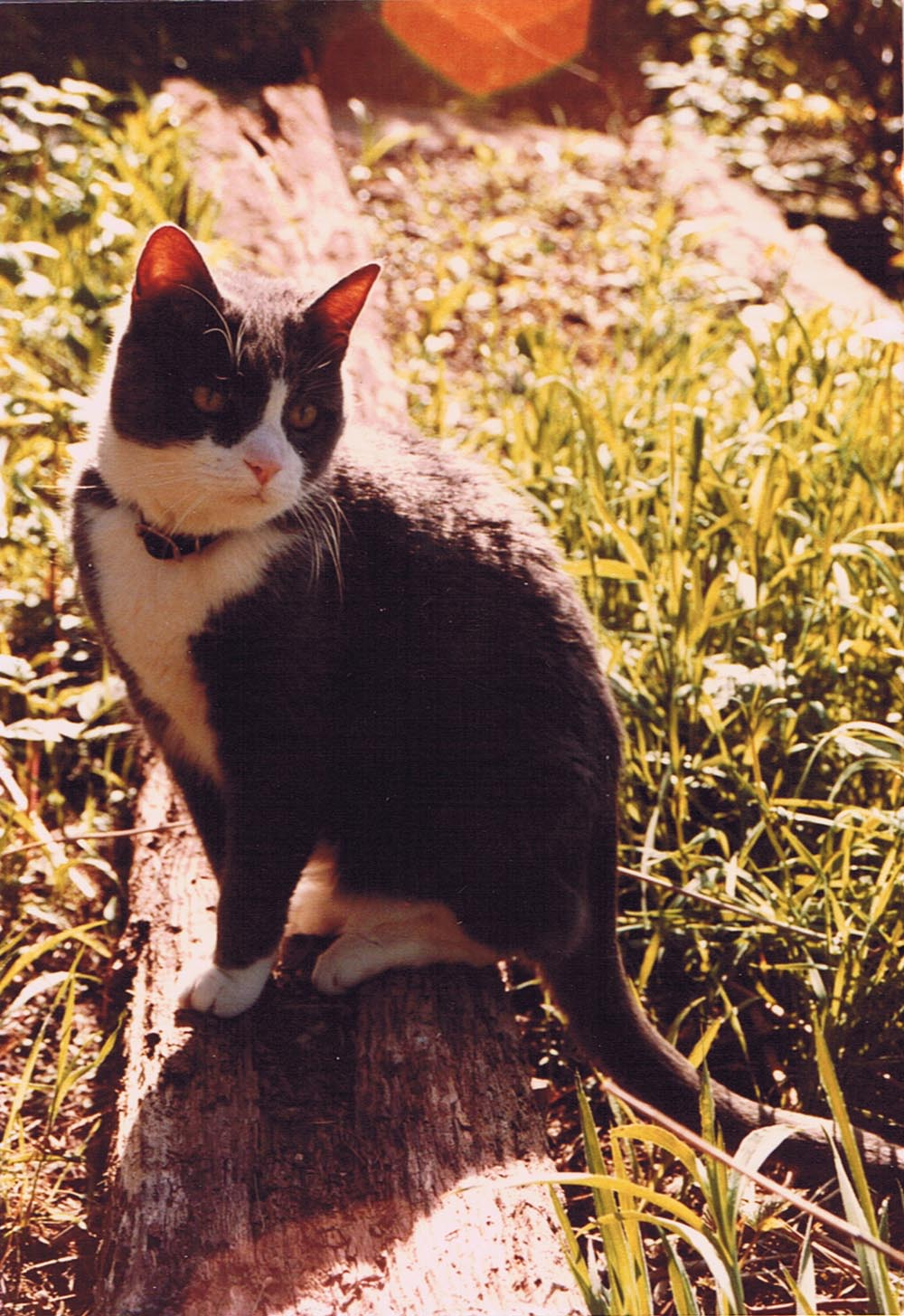 The Unintended Gift: My first cat, and how cats became my muse