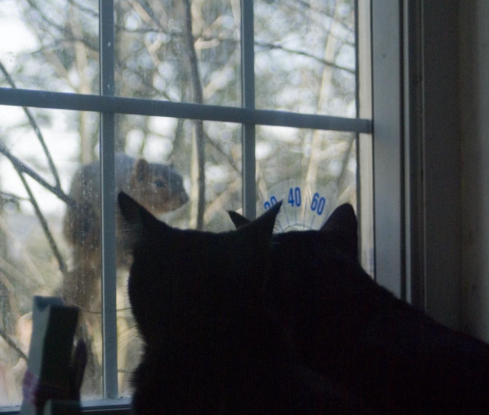 two black cats looking at squirrel outside window