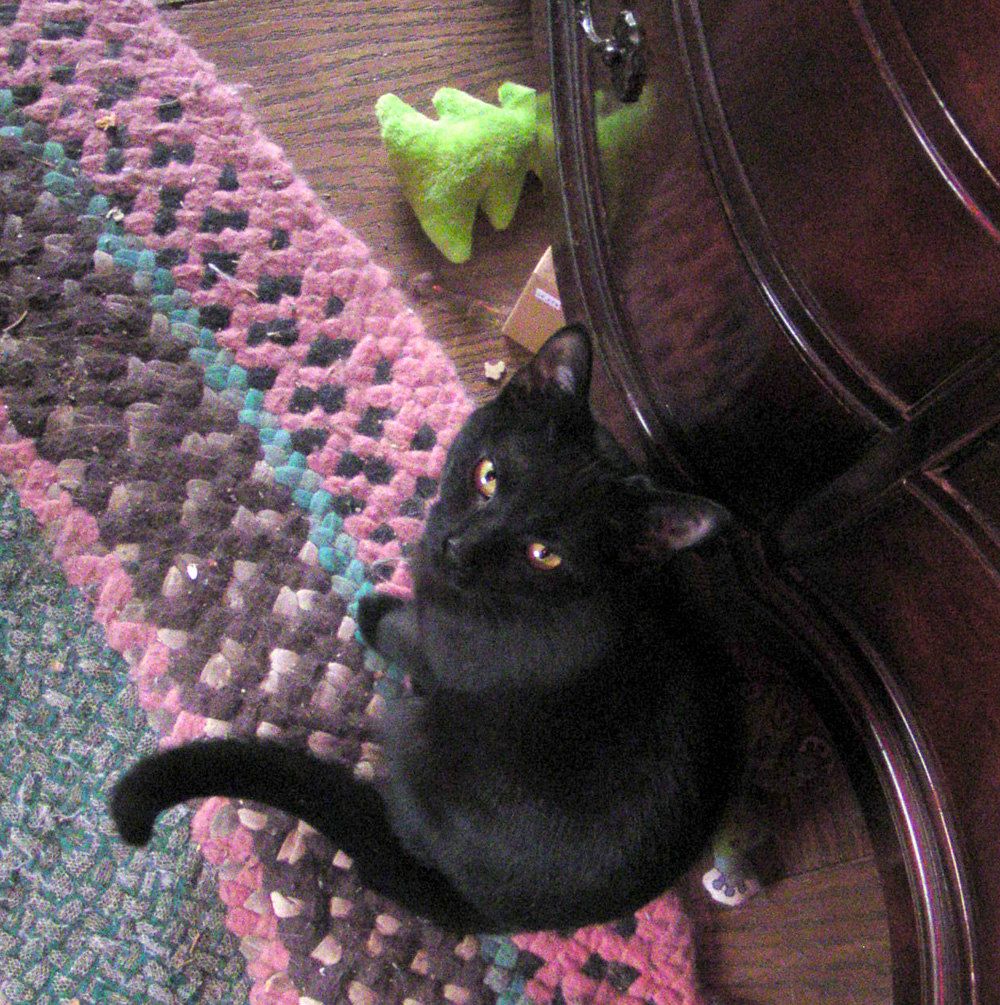 black cat with holiday toy