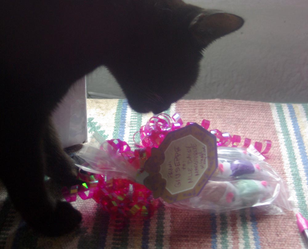 black cat investigating gift with ribbons