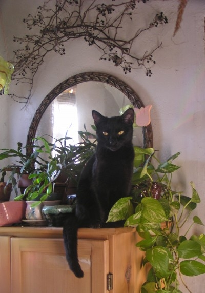 black cat among plants