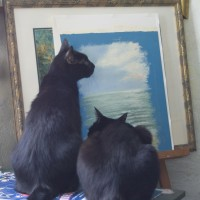 two black cats looking at painting
