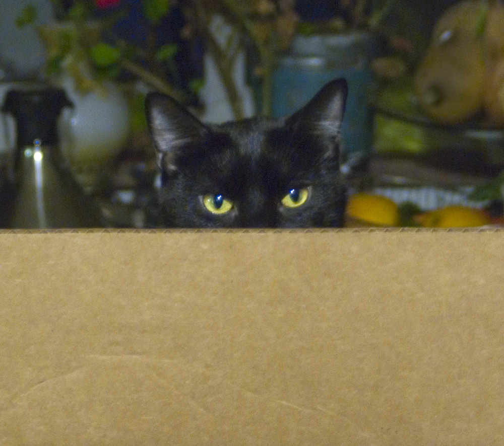 black cat in cardboard box