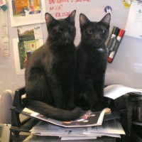 two black kittens in inbox