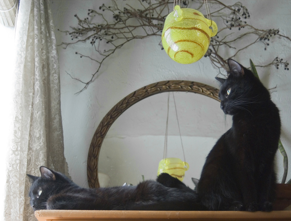 two black cats looking out window