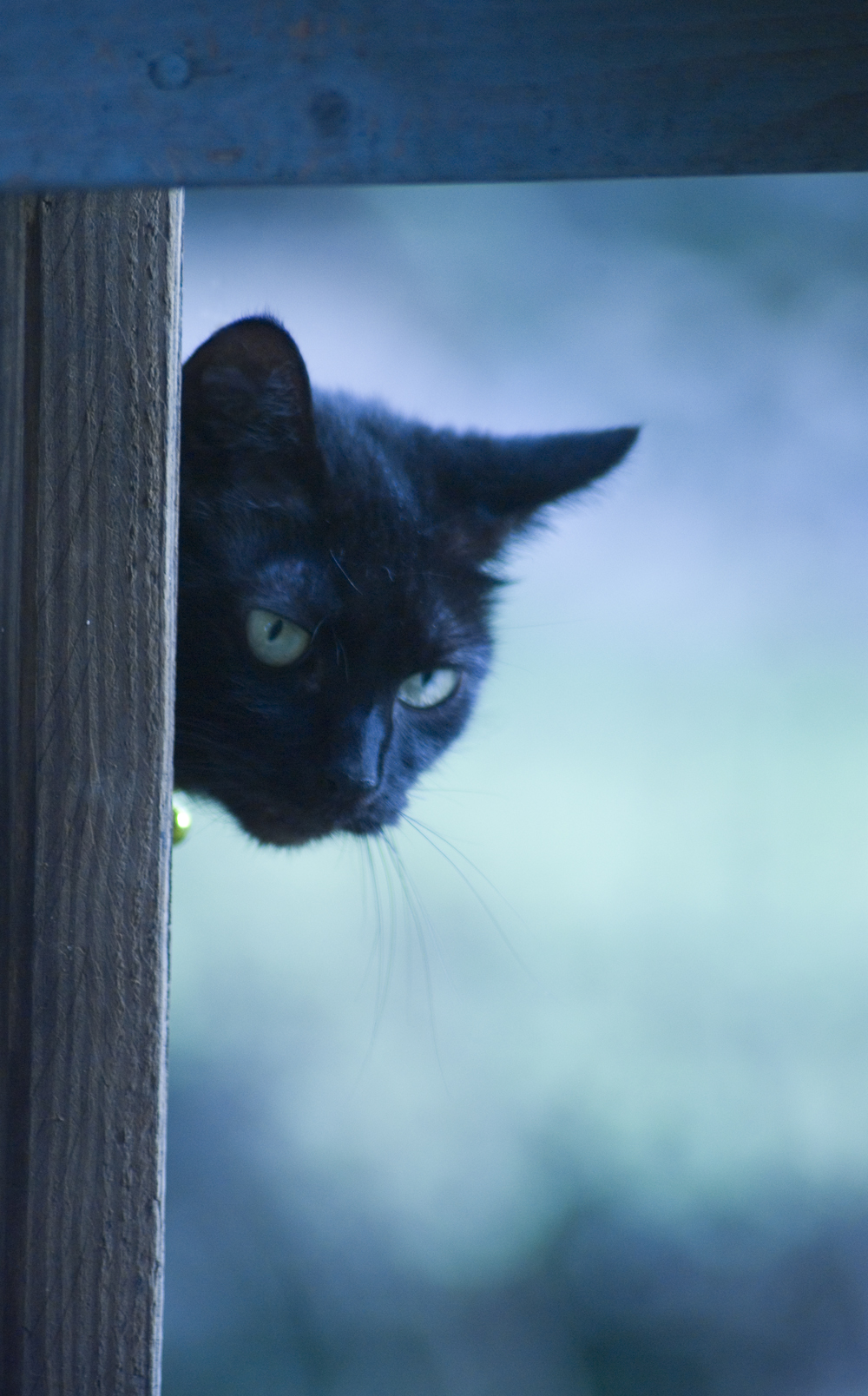 black cat looking through deck railing