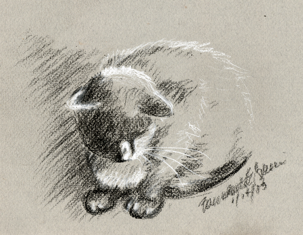 sketch of cat on gray paper