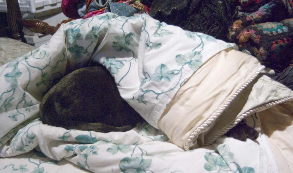 black cat rolled up in comforter