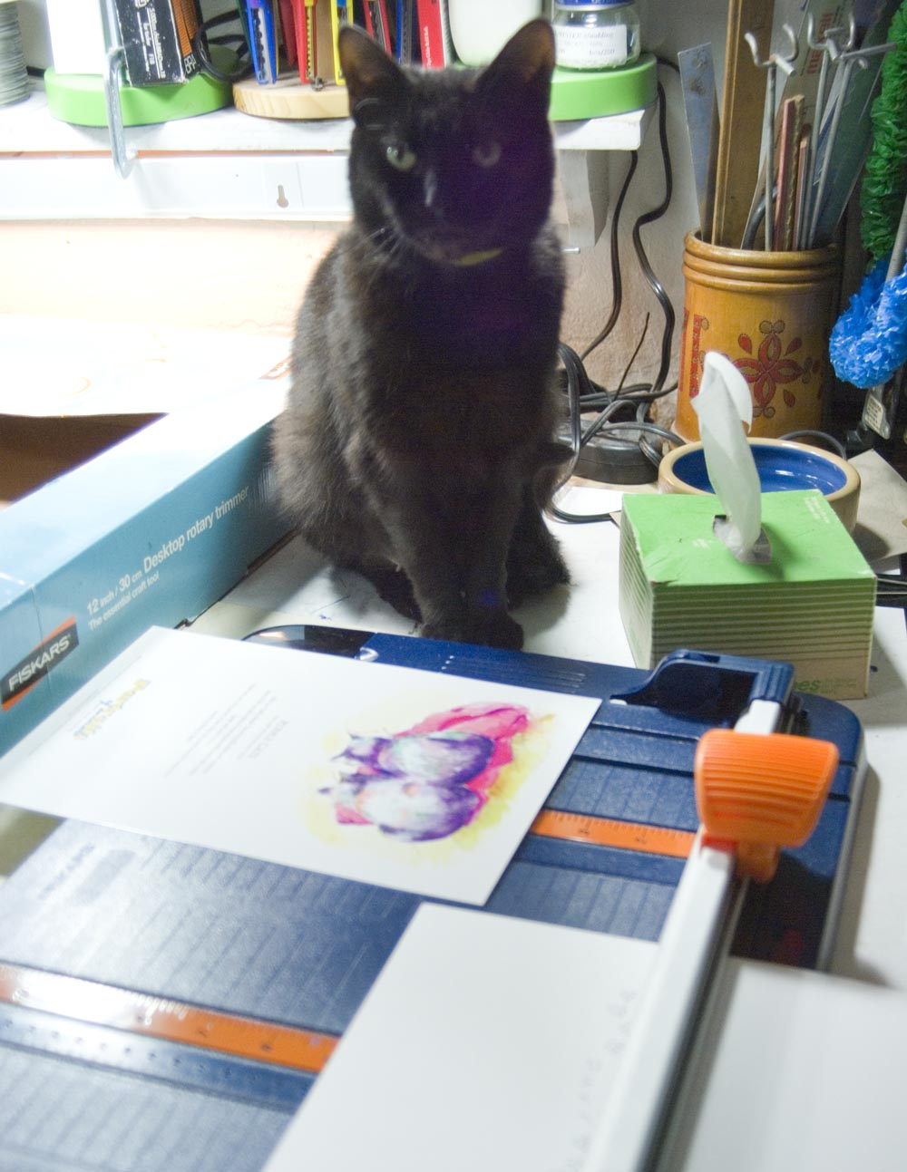 Black cat looking at cards.