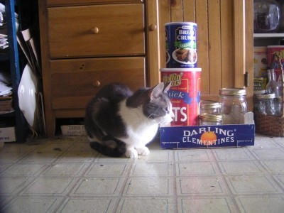 photo of cat with kitchen items