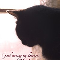 black cat looking out window with text