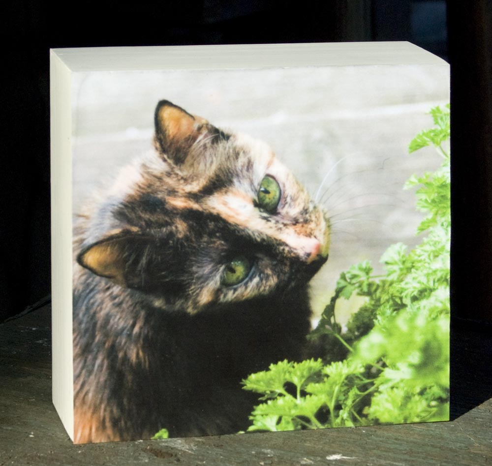 print of tortoiseshell cat with parsley
