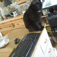 black cat with computer keyboard