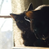 two black cats in profile