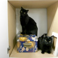 two black cats in cabinet
