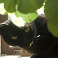 black cat with green leaves