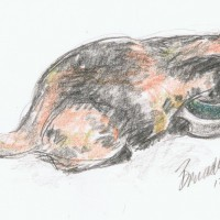 pencil sketch of cat drinking