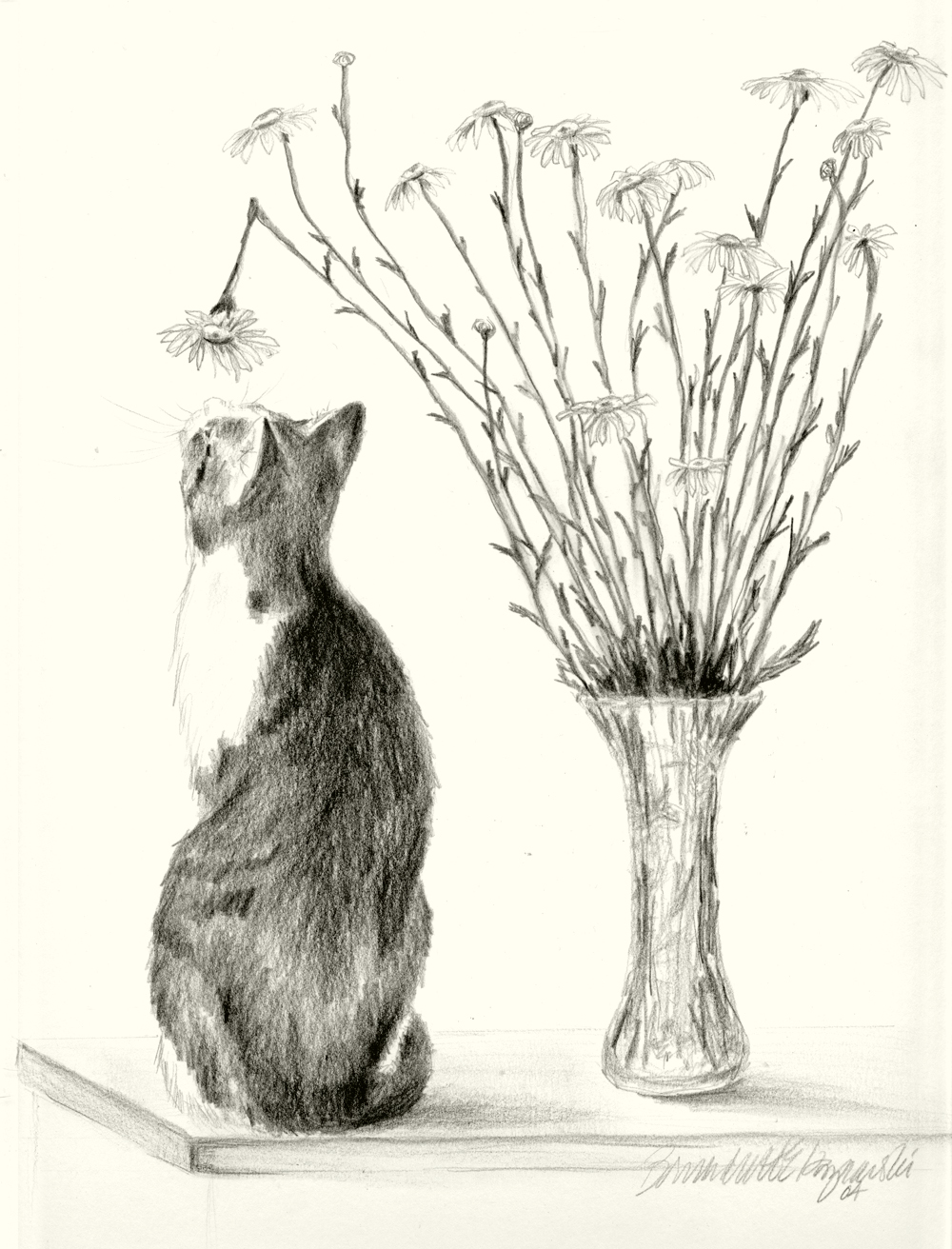 pencil portrait of cat with daisies