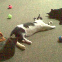 three kittens and a lot of cat toys